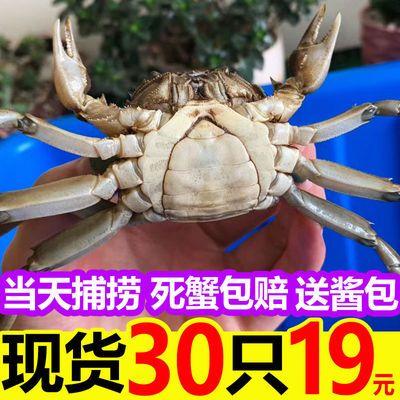 六月黄小螃蟹鲜活大闸蟹活体一二三元毛蟹稻田蟹河蟹30-100只直销