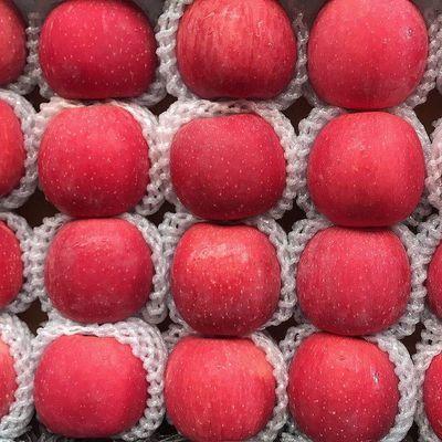 精品陕西正宗洛川红富士冰糖心苹果3斤/5斤/10斤当季新鲜水果脆甜