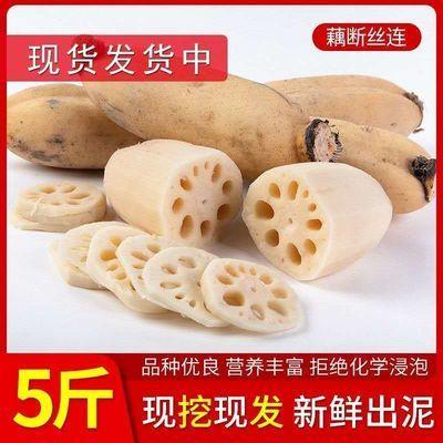 【新鲜直达】2020年现挖新鲜莲藕脆藕3-5斤清甜脆嫩