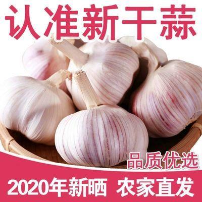 【新干蒜】干大蒜头鲜蒜紫皮蒜农家新鲜蔬菜3/5/10斤紫白皮蒜