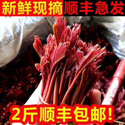 红香椿芽新鲜头茬20年现摘椿芽鲜嫩红油香椿野生蔬菜顺丰包邮