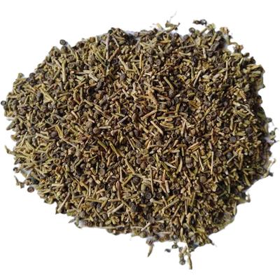 抗旱固沙种子 梭梭树种籽 毛条种子 培育琐琐树的灌木籽 量大优惠