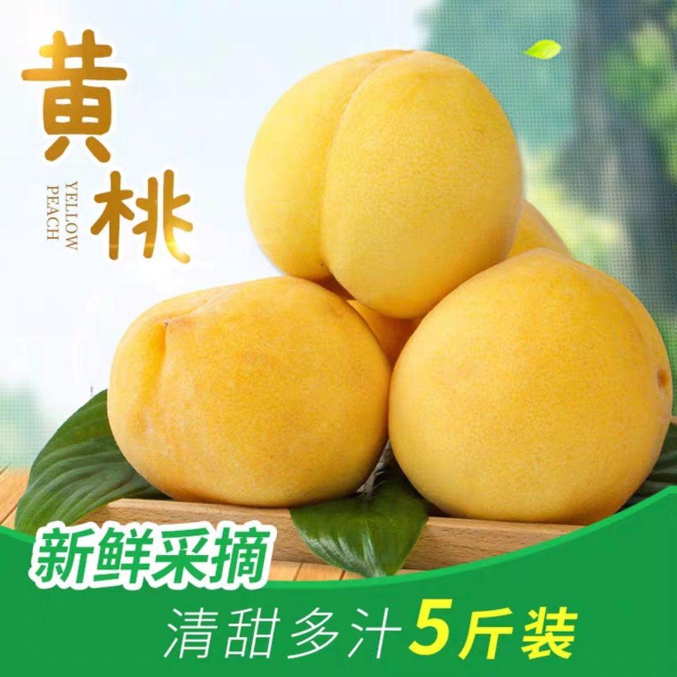黄桃整箱5斤黄金毛桃新鲜水果蟠桃砀山黄桃产地直发有坏包赔