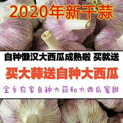 金乡大蒜新鲜大蒜头批发干蒜紫白皮新蒜农家自种蔬菜大蒜1/5/10斤
