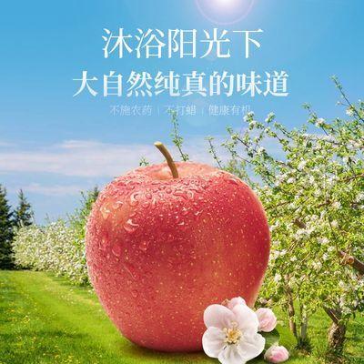 陕西秦阳苹果10斤新鲜当季脆甜丑萍果带整箱10斤装