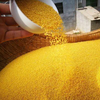 【农家自种精选】新黄小米厚油五谷杂粮粥粗粮