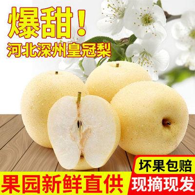 河北皇冠梨5/10斤装(单果200g起)当季新鲜梨