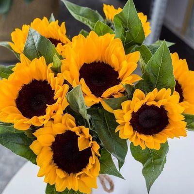 热销鲜花云南向日葵基地直发绣球花康乃馨各种花卉各种规格快递包