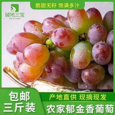 郁金香葡萄时令新鲜水果3斤包邮孕妇儿童东北特产绿色自然果提子