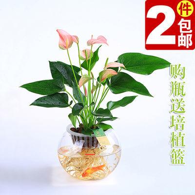 塑料透明水培大花瓶鱼缸花盆庭园艺居家办公室酒店商场