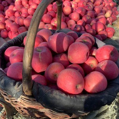【现发包邮】烟台红富士脆甜陕西秦冠丑苹果孕妇应季新鲜水果批发