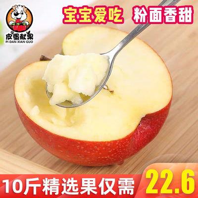 新品陕西秦冠苹果10斤包邮宝宝刮泥粉面大苹果整箱批发