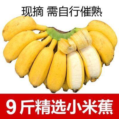 新品【今日大特价】广西小米蕉粉蕉西贡蕉苹果蕉9斤/5斤/3斤香蕉