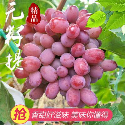 云南高山无籽提子葡萄应季水果现采现发营养低糖新鲜水果整箱包邮
