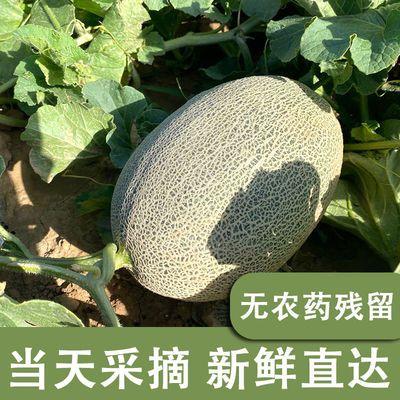 内蒙古沙漠哈密瓜新鲜水果当季整箱西州蜜网纹甜瓜孕妇3-10斤