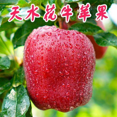 【天水人家】天水花牛苹果水果新鲜脆当季整箱3/5/10斤批蛇果现摘