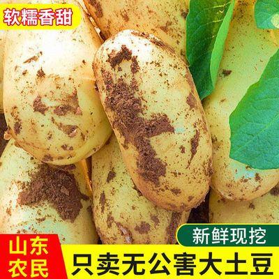 黄心大土豆21年新鲜现挖马铃薯山东农家自种大个5斤洋芋10斤包邮