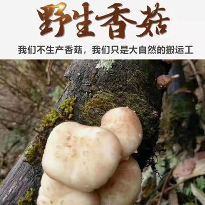 城步苗乡大山上的野生香菇+美味可口+香气扑鼻+发泡后炒炖蒸