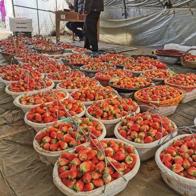 新品现摘云南新鲜酸甜草莓2斤包邮新鲜孕妇水果非丹东99奶油草莓1