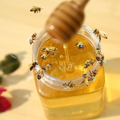 蜂蜜【买一送一】百花蜂蜜洋槐蜂蜜枣花蜜土蜂蜜天然蜂蜜500g/瓶