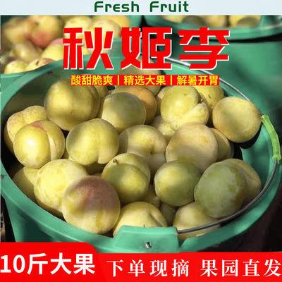 陕西秋姬李子脆甜新鲜水果果园现摘当季应季孕妇水果现货包邮