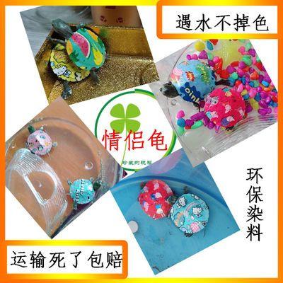 巴西草小乌龟活体宠物彩绘好养动物玩具用品饲料便宜易养活巴西龟