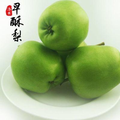 现摘早酥梨子陕西早熟梨子青皮梨脆梨子新鲜水果5斤10斤整箱包邮