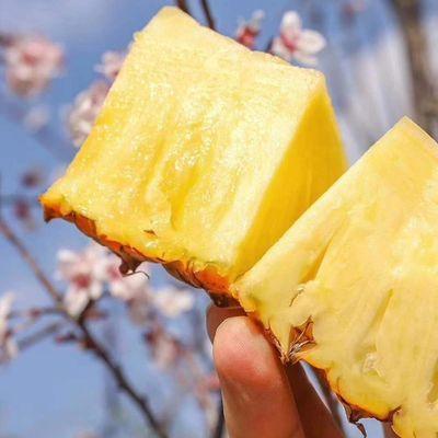海南正宗金钻凤梨新鲜应季水果现摘大金菠萝手撕无眼凤梨树上熟