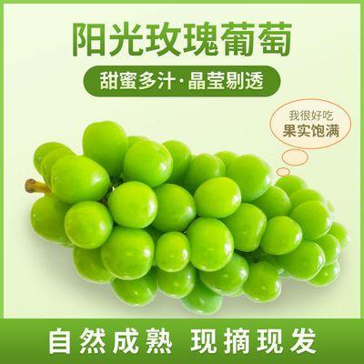 【顺丰包邮】日本晴王阳光玫瑰青提无籽香印青提葡萄新鲜水果