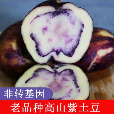 云南舍得新鲜紫土豆本地小洋芋马铃薯迷你紫薯高寒山区特产