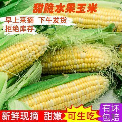 新鲜玉米棒云南双色水果玉米新鲜蔬菜当季农家带皮壳现摘现发甜脆