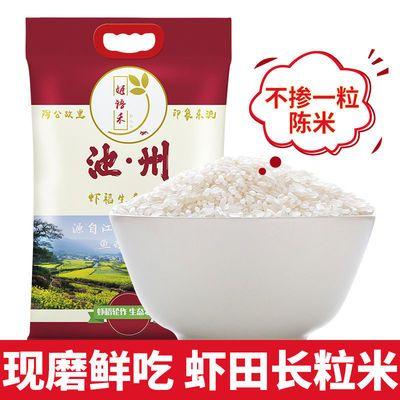 19年新米10斤特价批发优质大米正宗长粒香米虾稻米虾田生态米8斤