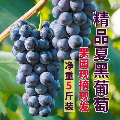 夏黑葡萄3斤5斤装新鲜水果整箱夏黑无籽提子当季时令黑提红提包邮