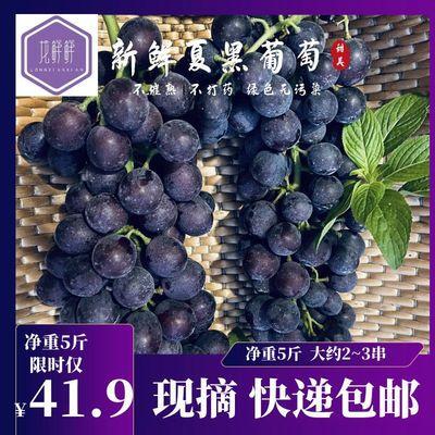 【现摘包邮】夏黑无籽葡萄 提子 新鲜应季水果 净重5斤