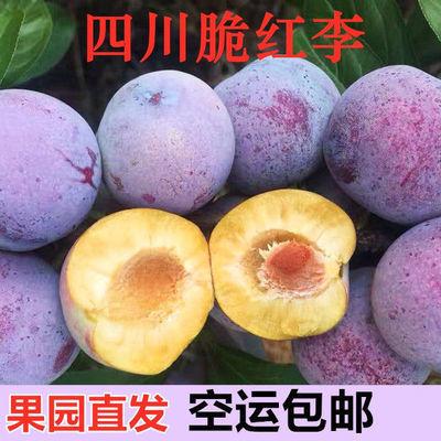 新鲜四川脱骨李脆红李子脱骨当季时令水果清脆土李子3斤(5斤空运)