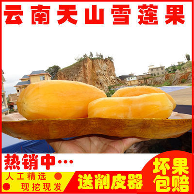 天山雪莲果现挖整箱批发孕妇水果新鲜包邮/食品/零食3斤/10斤