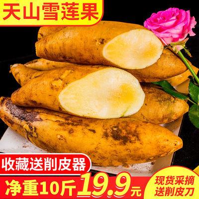 天山雪莲果云南红泥雪莲果应季新鲜水果特产3/5/10斤现挖包邮