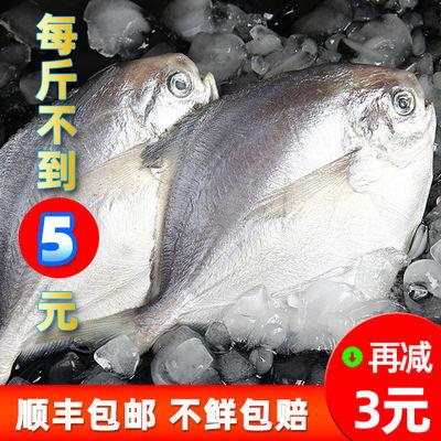 鲳鱼新鲜银鲳鱼白鲳鱼平鱼海鱼海鲜水产冷冻雪花鲳小银昌鱼金鲳鱼