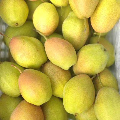 新品【10斤特价】陕西红香酥梨香梨梨子香梨酥梨新鲜水果脆甜多汁