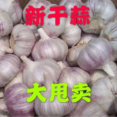 41313/【坏包赔】山东金乡大蒜头批发干蒜新鲜3斤5斤10大蒜子批发价净重
