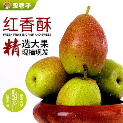 河北深州红香酥梨子现摘现发新鲜脆甜香梨当季水果整箱包邮红香酥【9月9日发完】