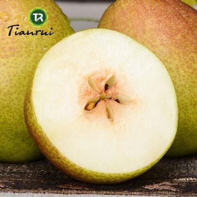 【10斤特价】陕西红香酥梨香梨梨子香梨酥梨新鲜水果脆甜多汁5斤