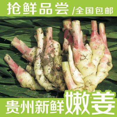 57894/贵州新鲜子姜/嫩姜/小黄姜/泡姜/红芽嫩姜