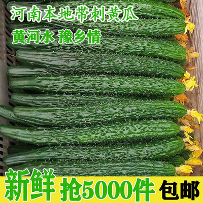 2020黄瓜新鲜蔬菜绿色现摘河南本地带刺农家自种新鲜黄瓜清脆可口