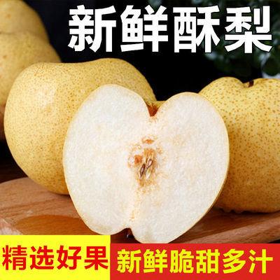 10斤酥梨陕西新鲜甜酥梨贡梨冰糖雪梨现摘3斤/带箱皇冠梨子白酥梨
