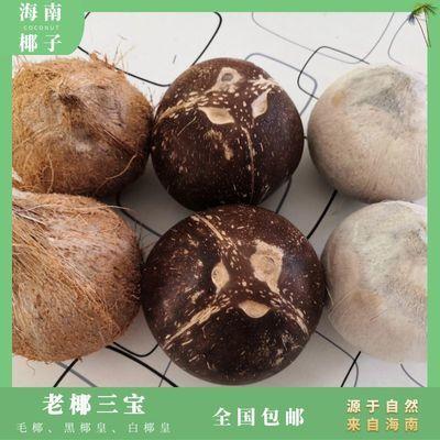 海南牛奶老椰毛椰椰皇椰王椰子碗椰子冻椰子鸡饭店甜品店专用材料