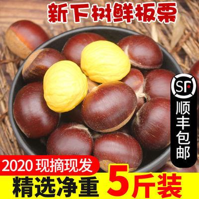 【顺丰包邮】2020新板栗生新鲜5斤栗子锥栗仁带壳油栗当季现摘3斤
