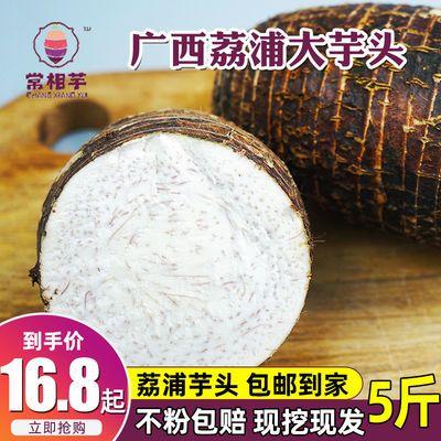 广西荔浦芋头新鲜现挖香芋槟榔大紫藤芋粉糯香农家蔬菜非红芽毛芋