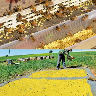 纯天然油菜花粉茶花粉荷花粉喂蜂花粉活性未破壁食用蜂花粉500g
