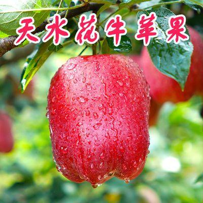 【天水人家】花牛苹果刮泥婴儿水果新鲜当季3/5/10斤孕妇特价蛇果